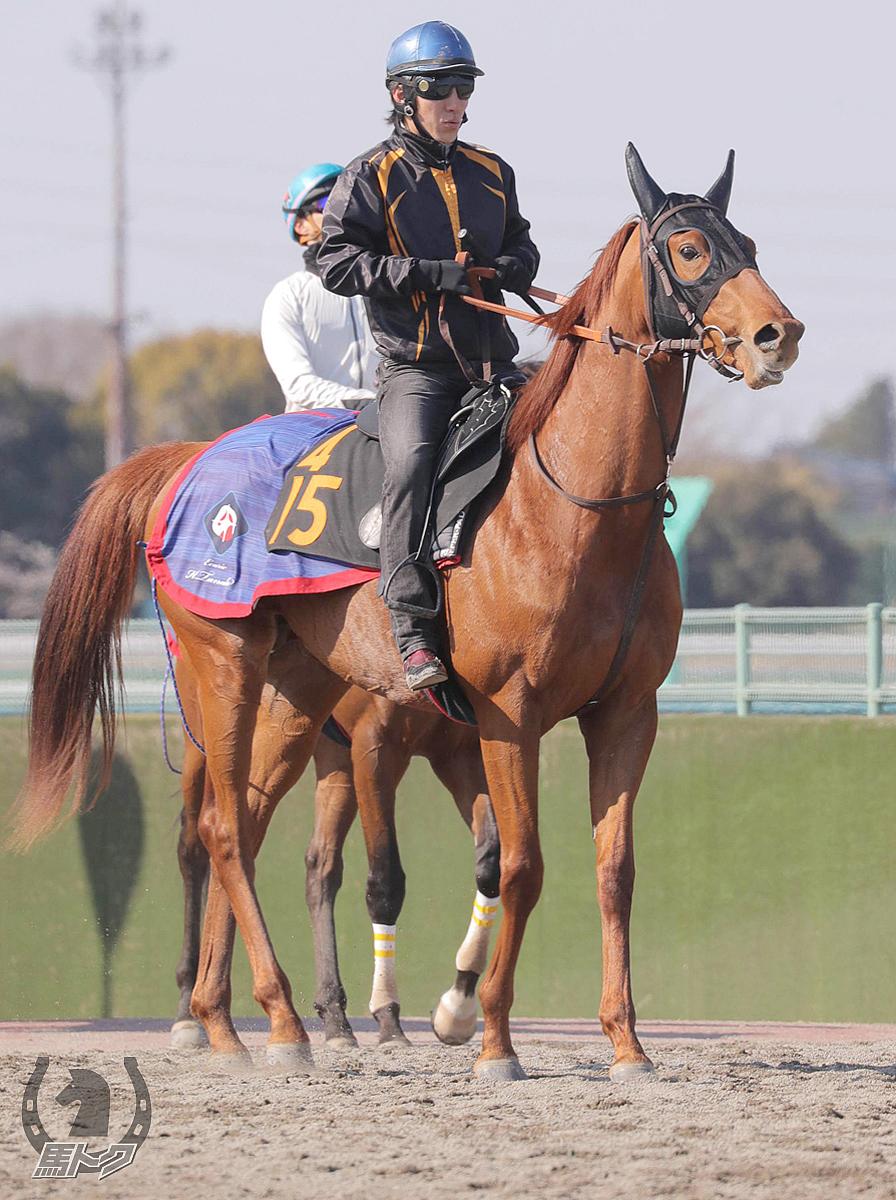 コスモカレンドゥラの馬体写真