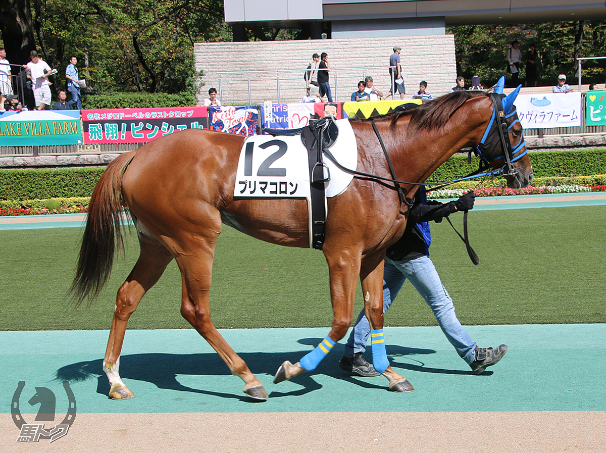 プリマコロンの馬体写真