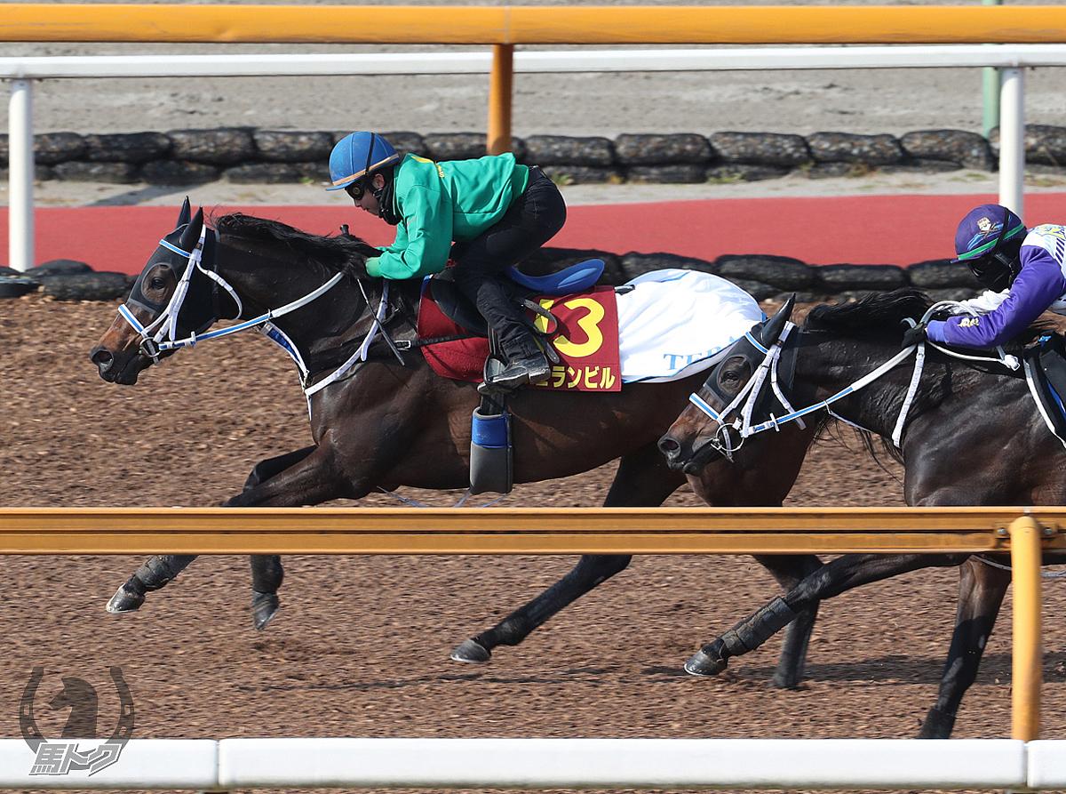 ジュランビルの馬体写真