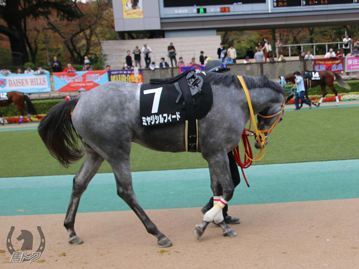 ミヤジシルフィードの馬体写真