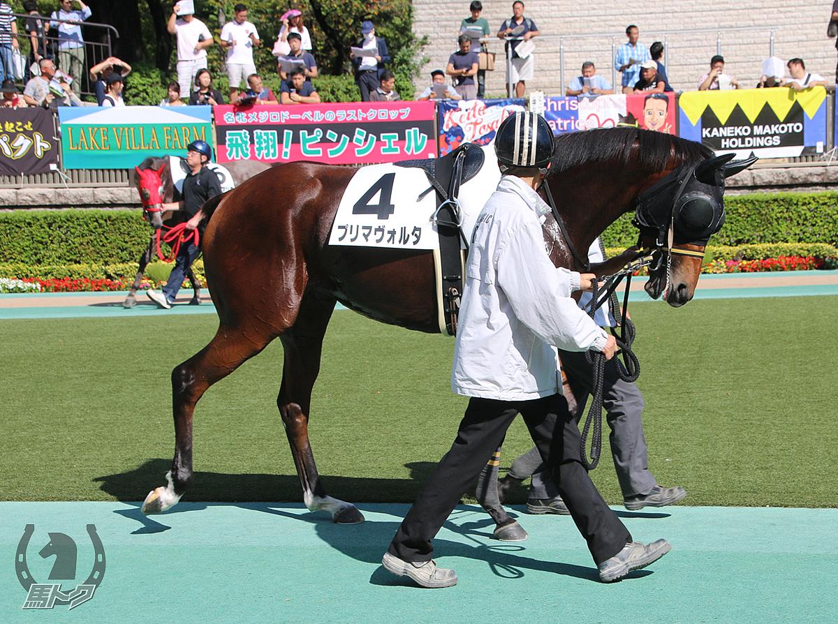 プリマヴォルタの馬体写真