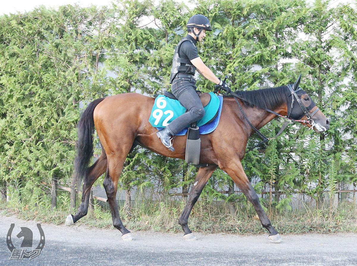 オーミサルーテの馬体写真