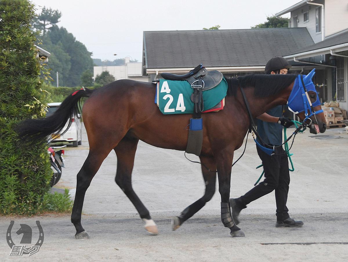 ブルベアコローレの馬体写真