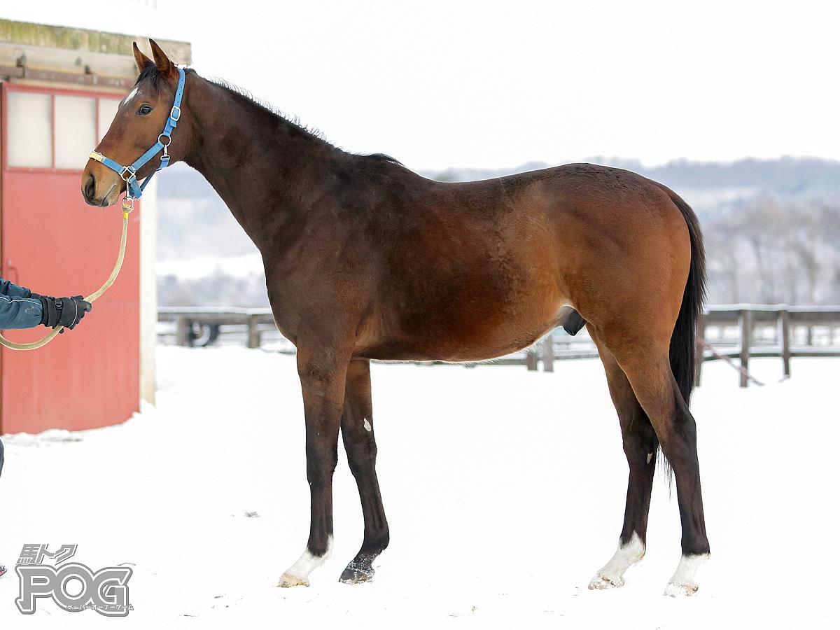 ハルノツカイの馬体写真
