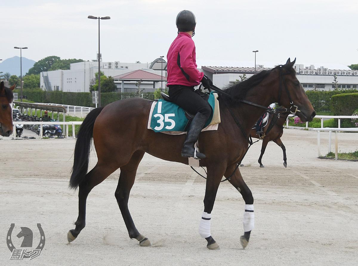 アオイツヤヒメの馬体写真