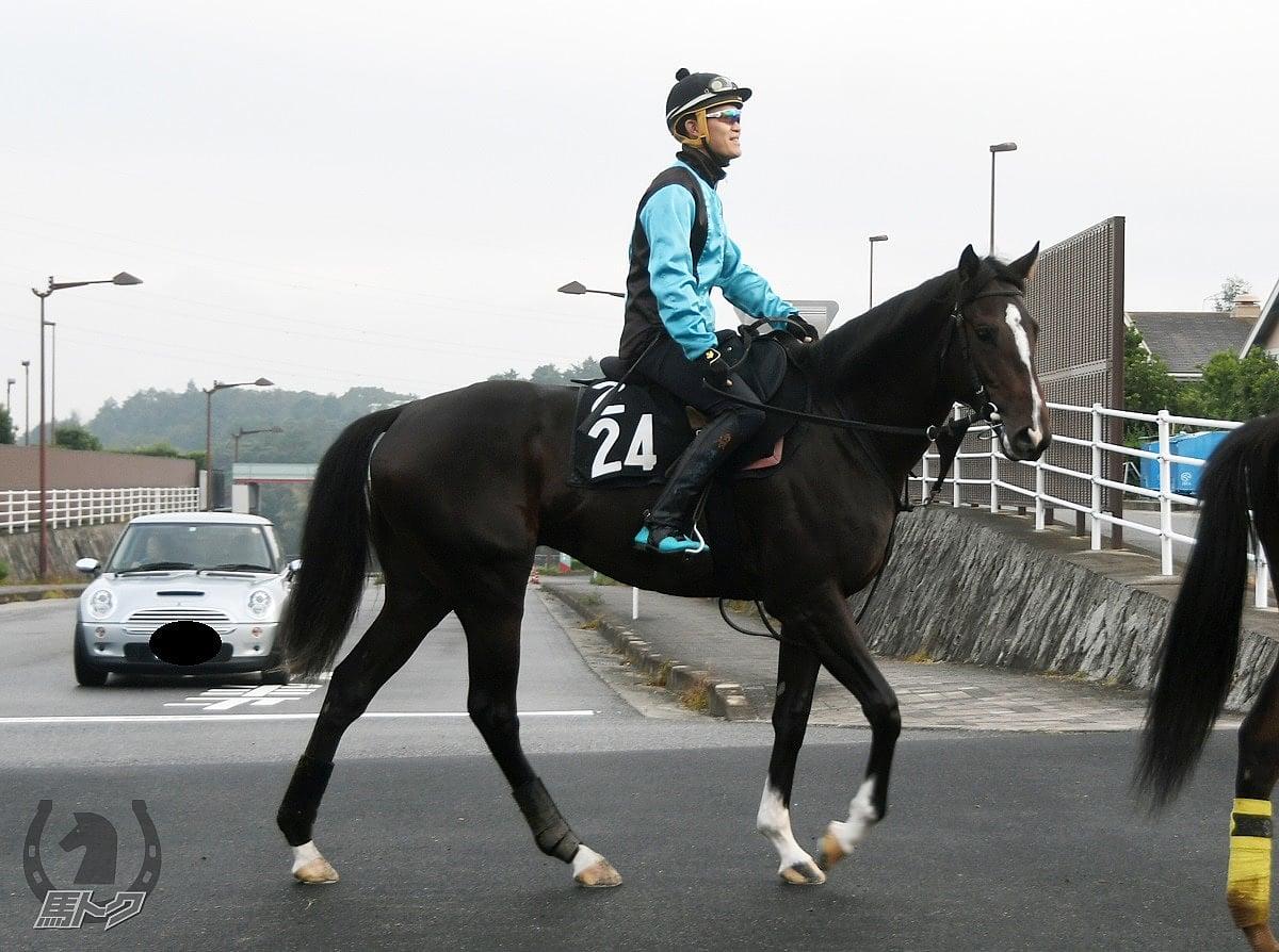 カッシーニの馬体写真