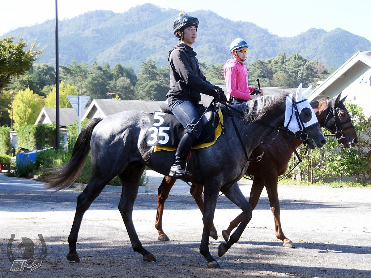 セクシーサンキューの馬体写真