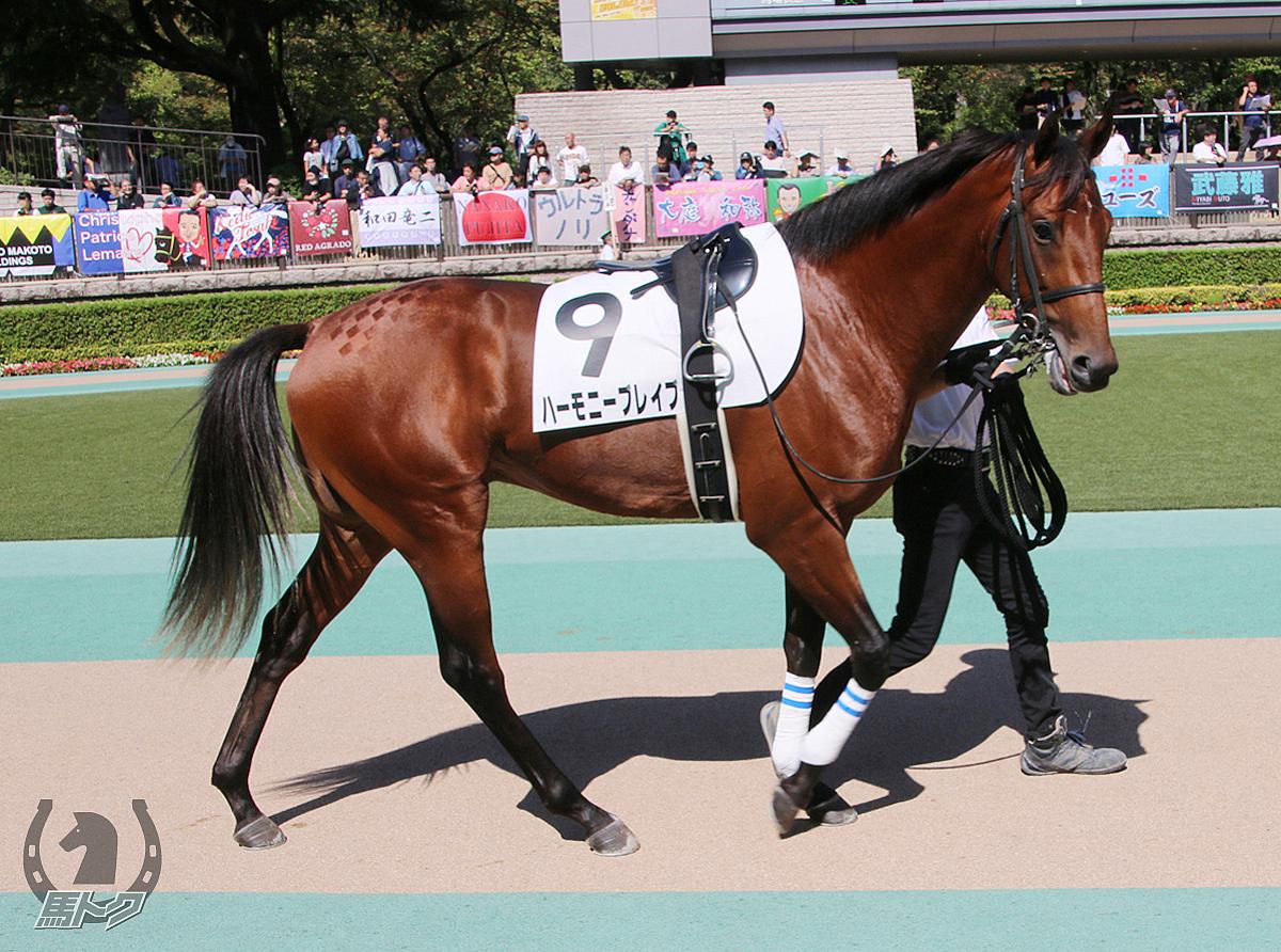 ハーモニーブレイブの馬体写真