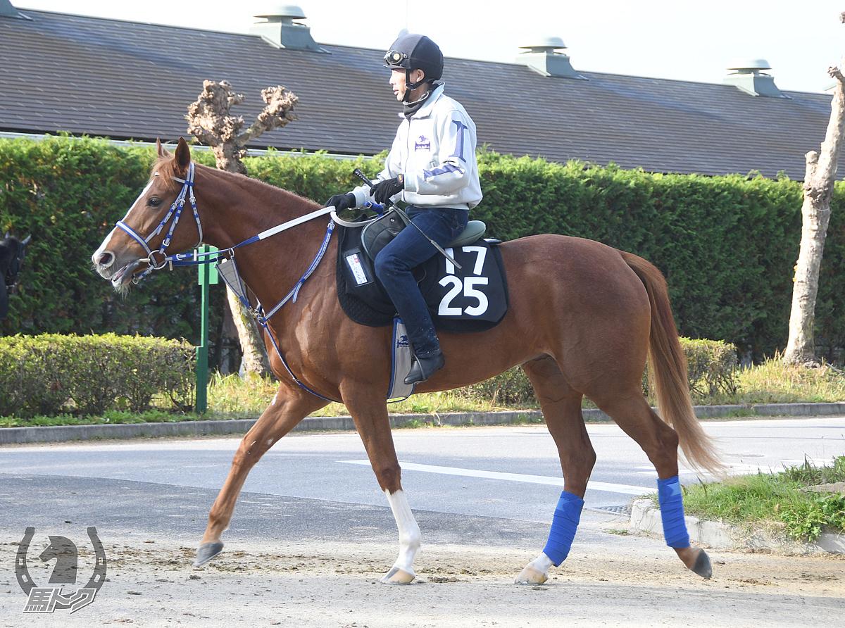 スターペスユキコの馬体写真