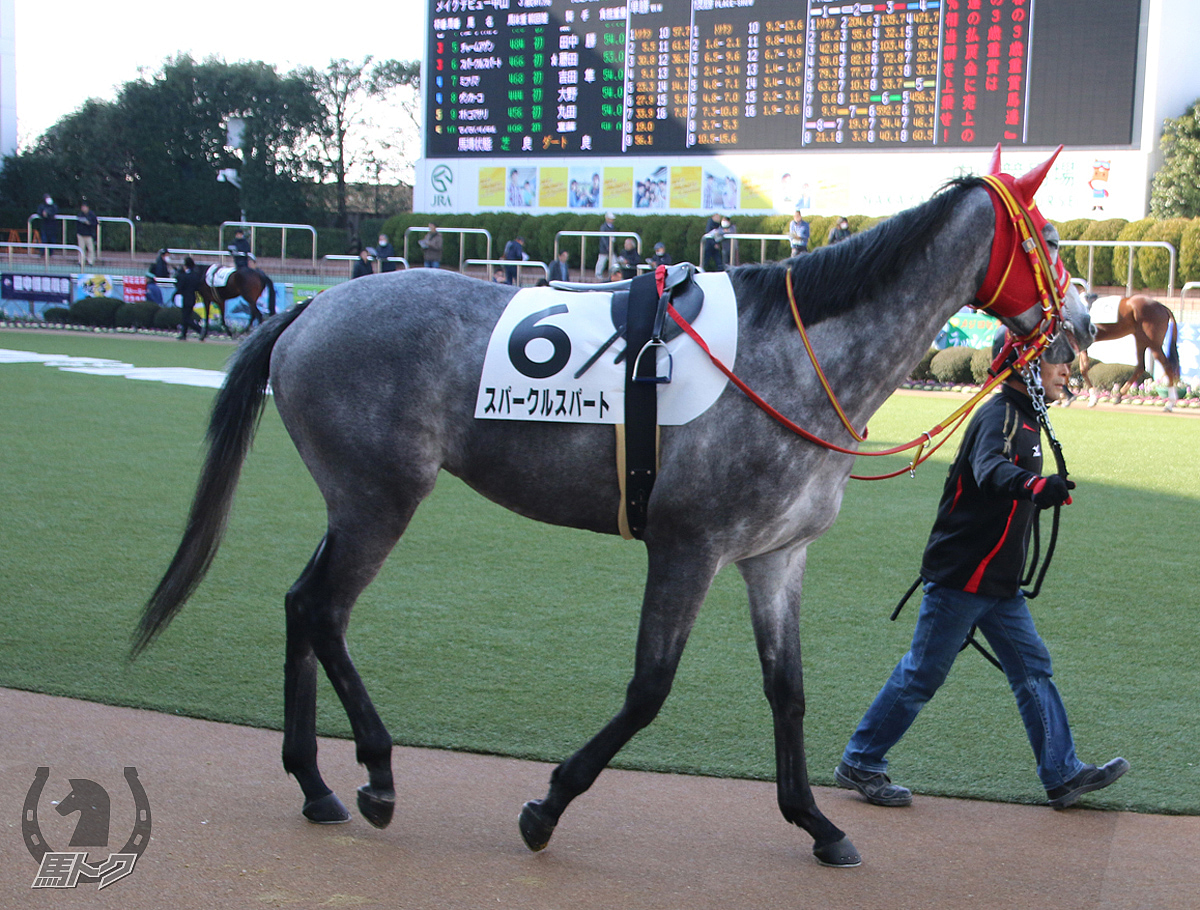スパークルスパートの馬体写真