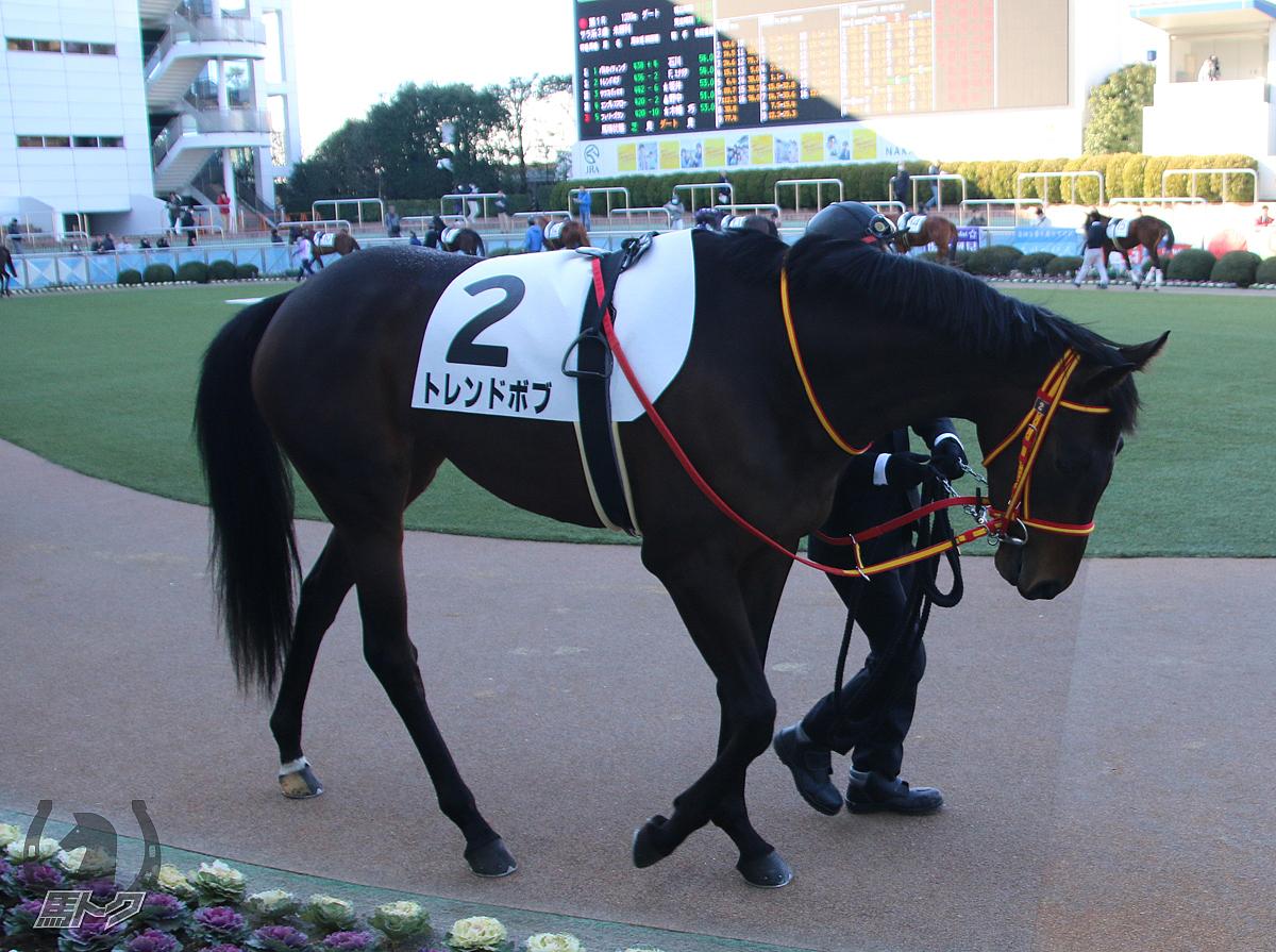 トレンドボブの馬体写真