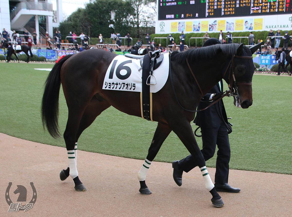 ショウナンアオゾラの馬体写真
