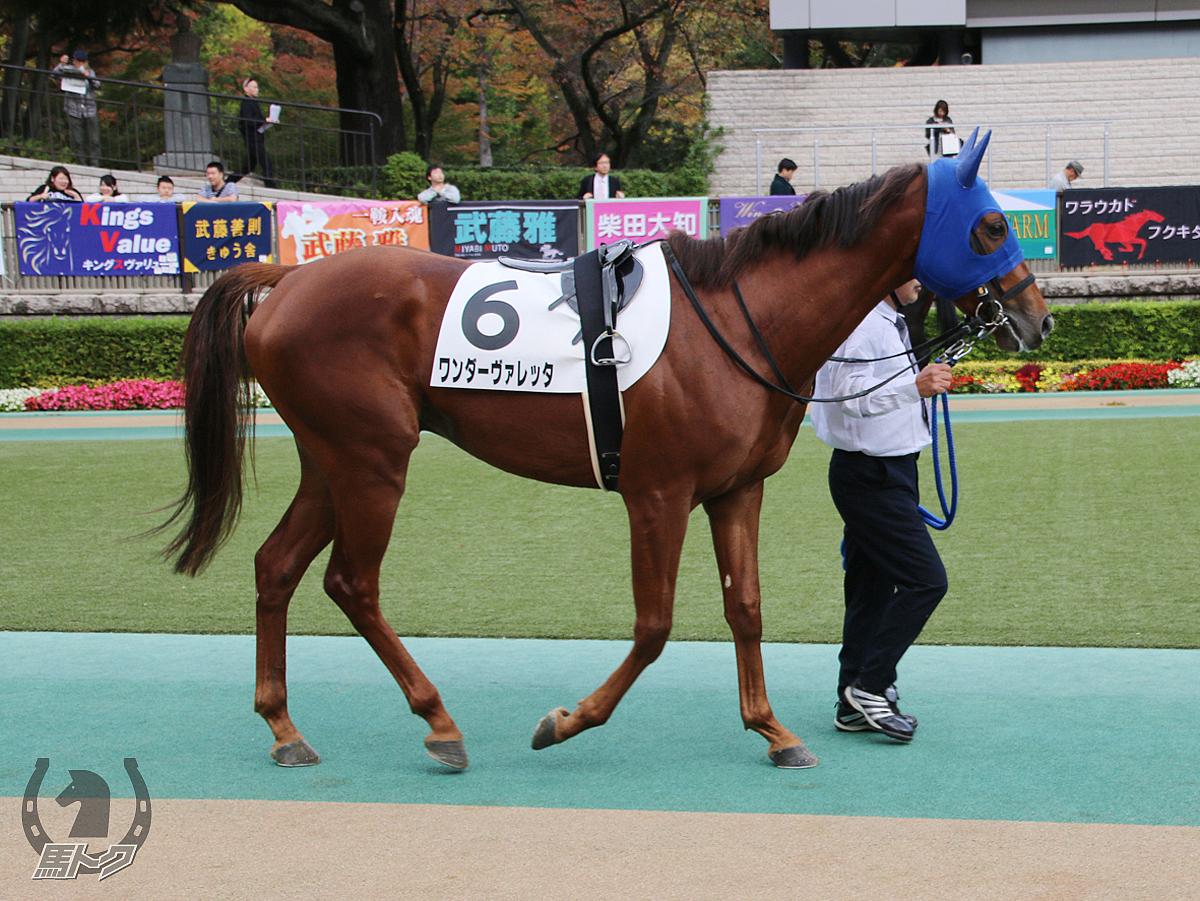 ワンダーヴァレッタの馬体写真