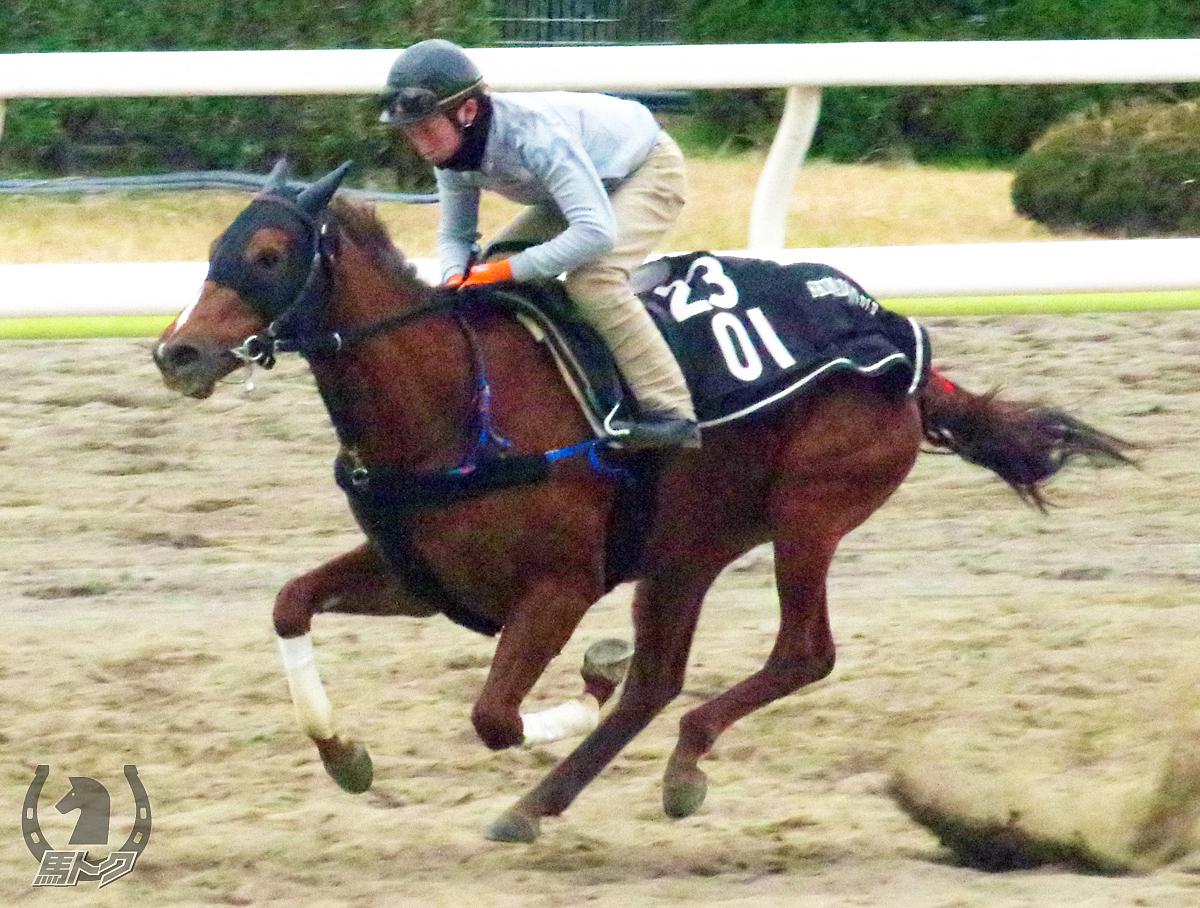 アークヴィグラスの馬体写真