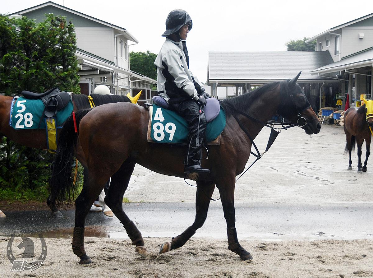 ラストクリーガーの馬体写真