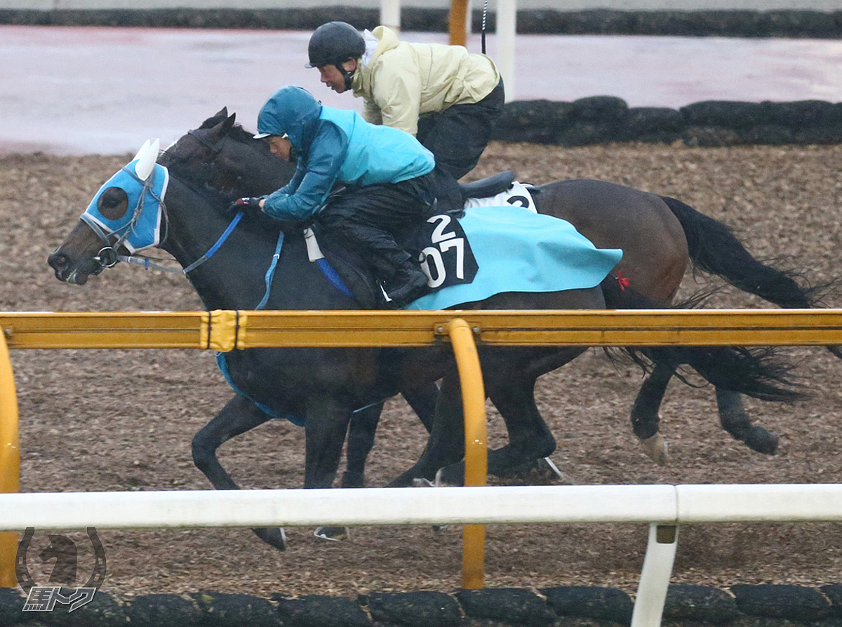 オーパキャマラードの馬体写真