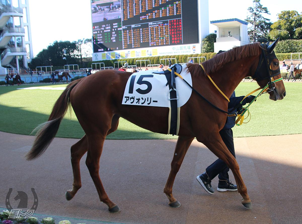 アヴォンリーの馬体写真