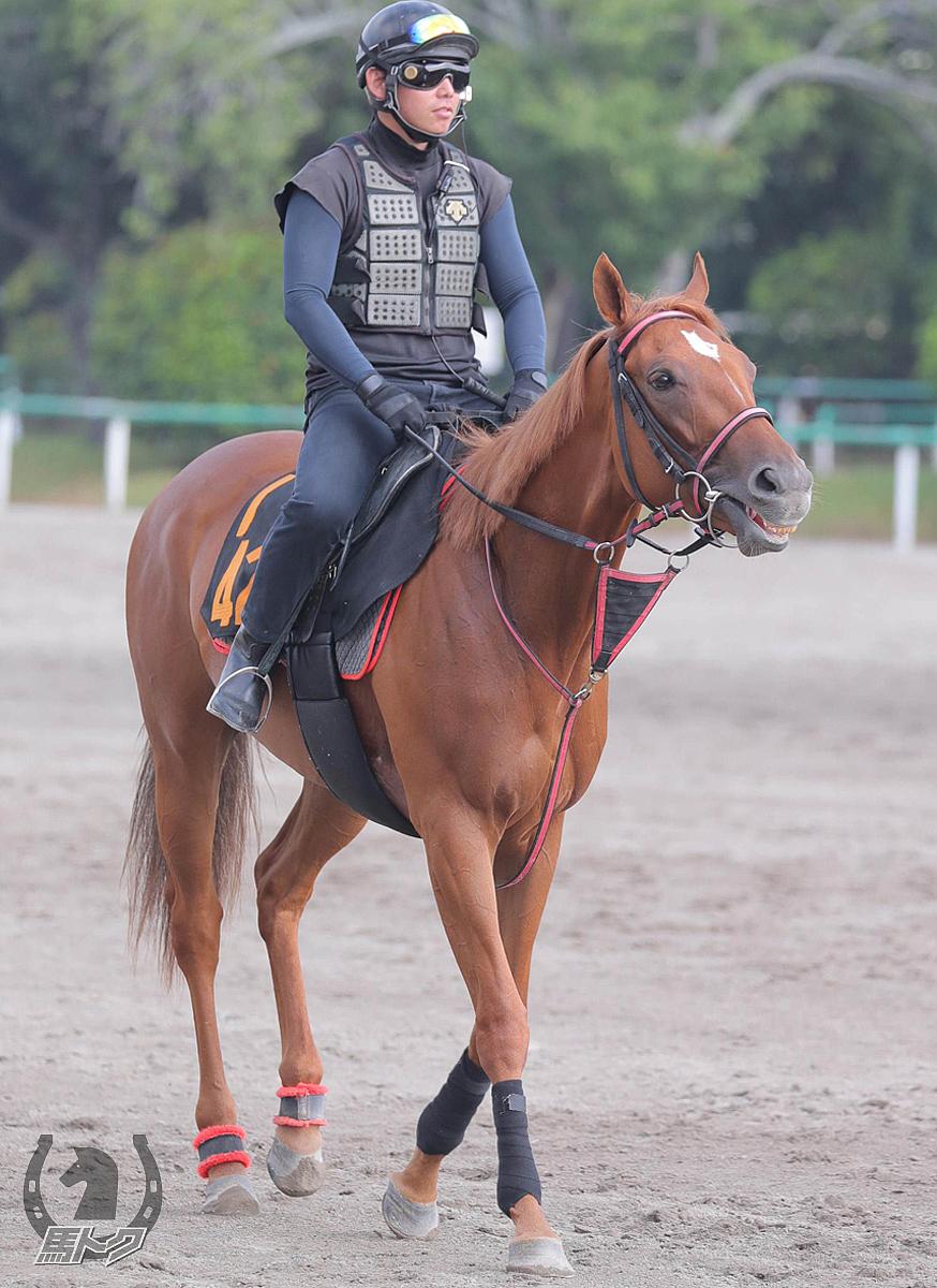 ウインゼノビアの馬体写真