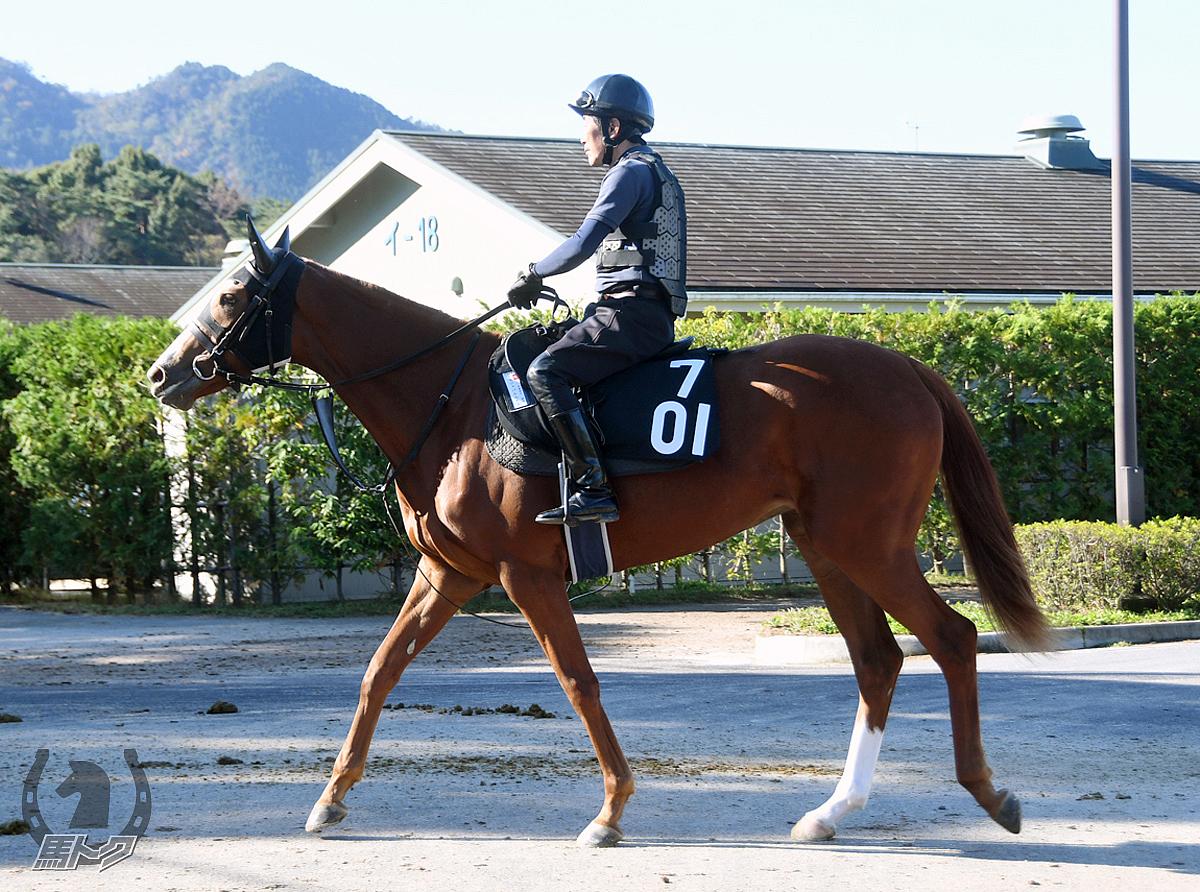 トモジャパルムドルの馬体写真