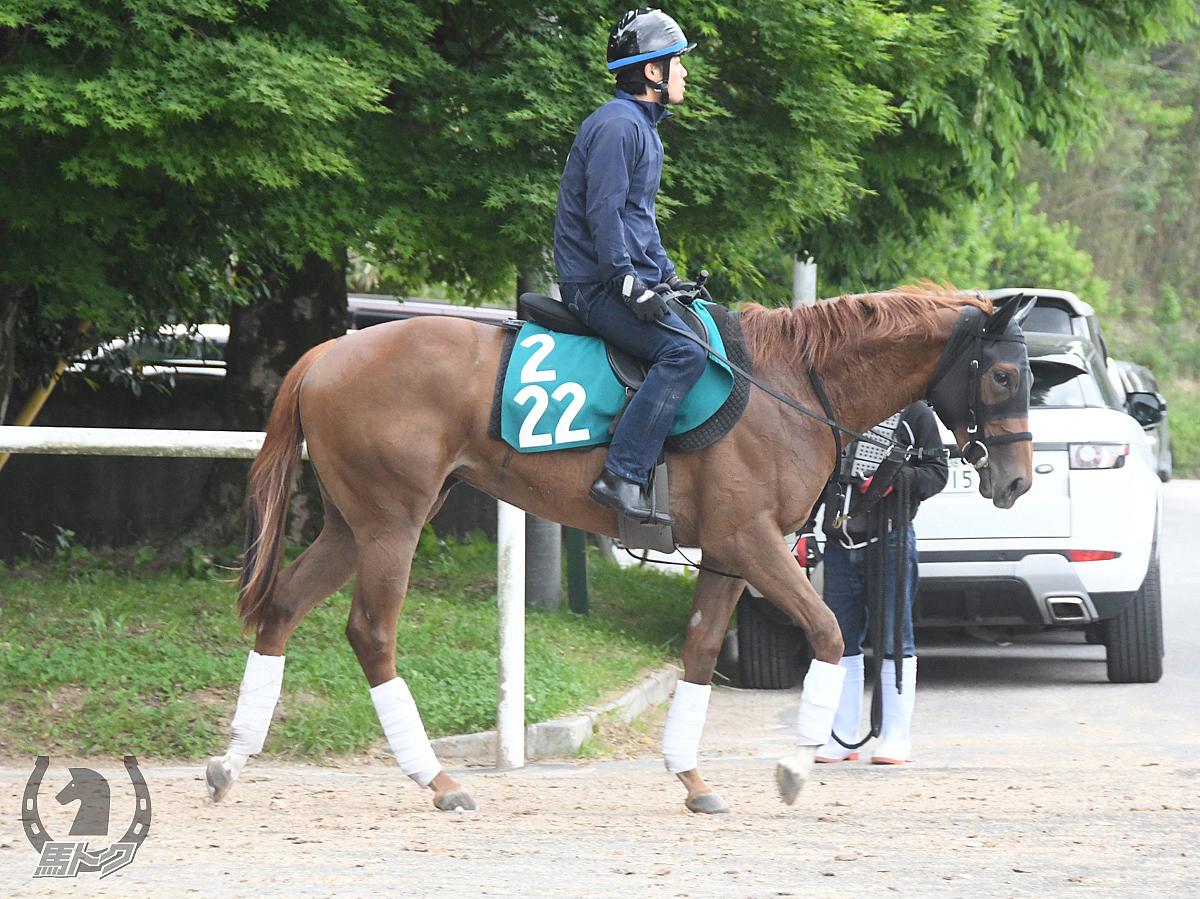 シェルトファータの馬体写真