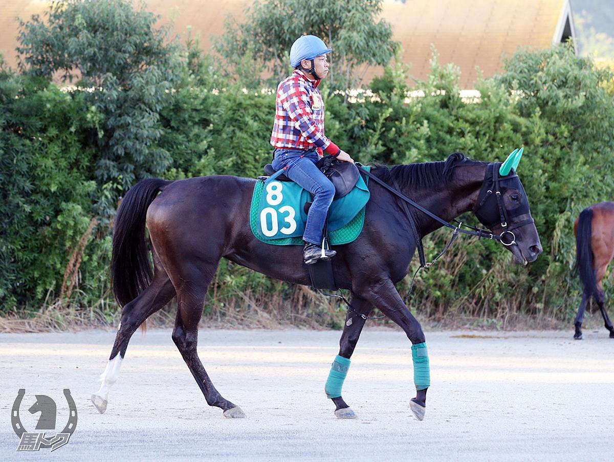 タマモキャーンズの馬体写真