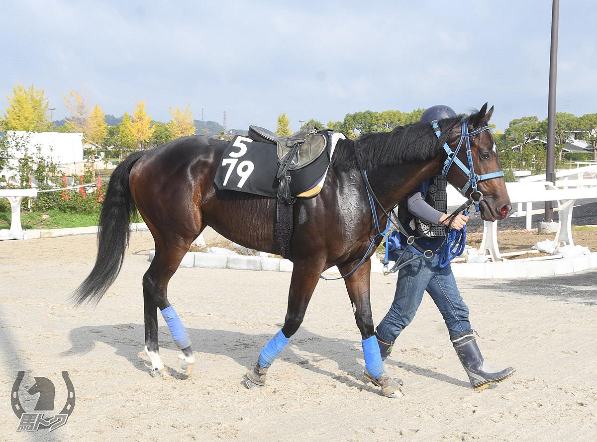 タカノオージャの馬体写真