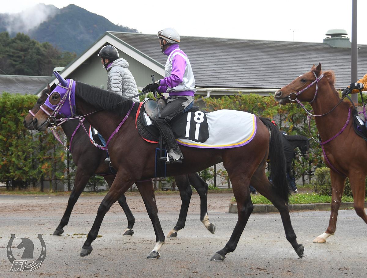 メイショウハナグシの馬体写真