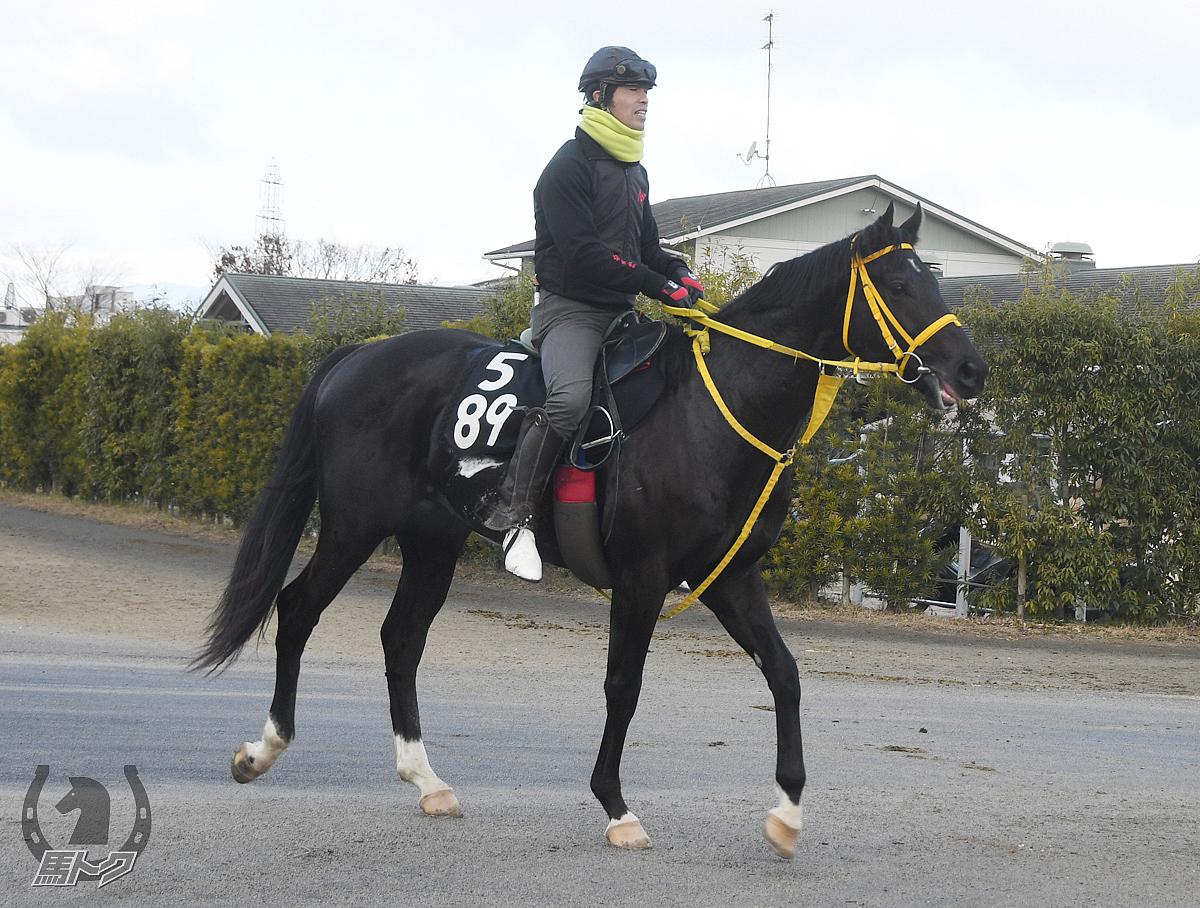 タガノハンマーの馬体写真