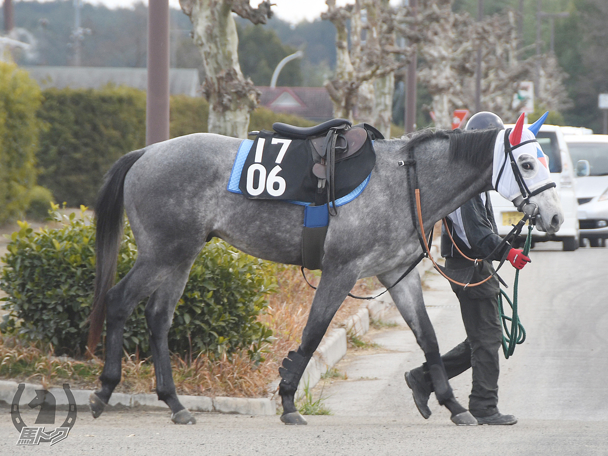 タガノゴマチャンの馬体写真