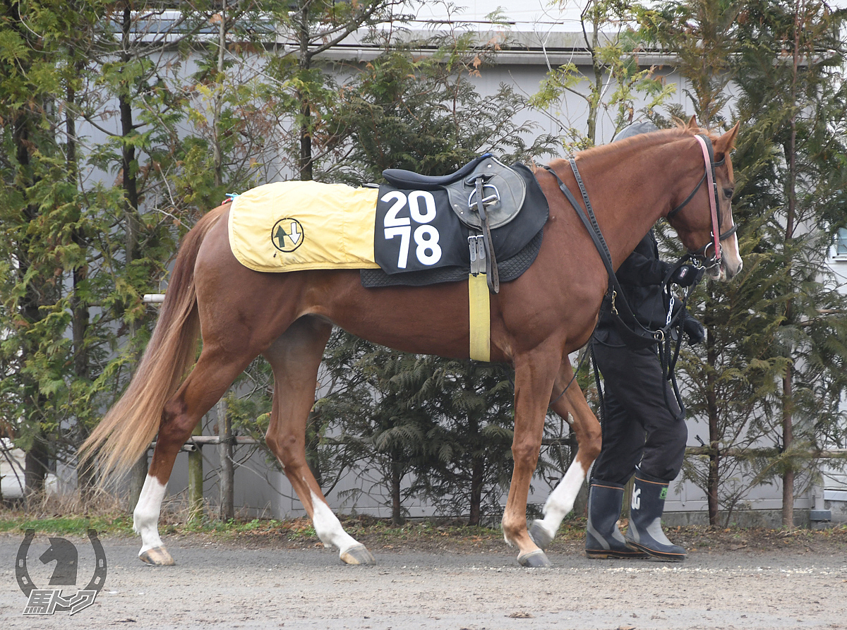 タガノスプモーネの馬体写真
