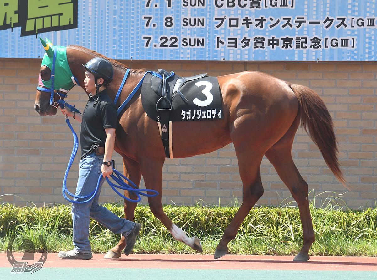 タガノジェロディの馬体写真