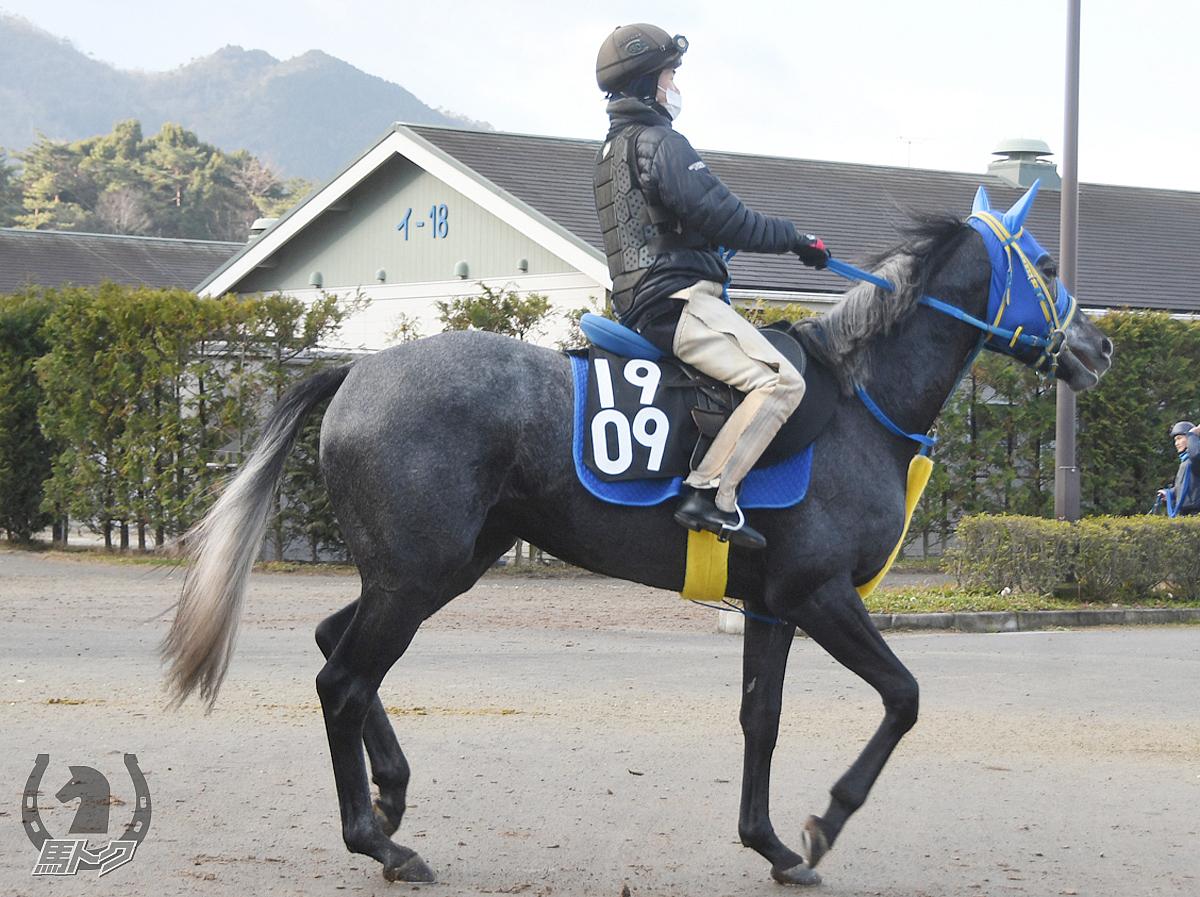 オグリクロノスの馬体写真