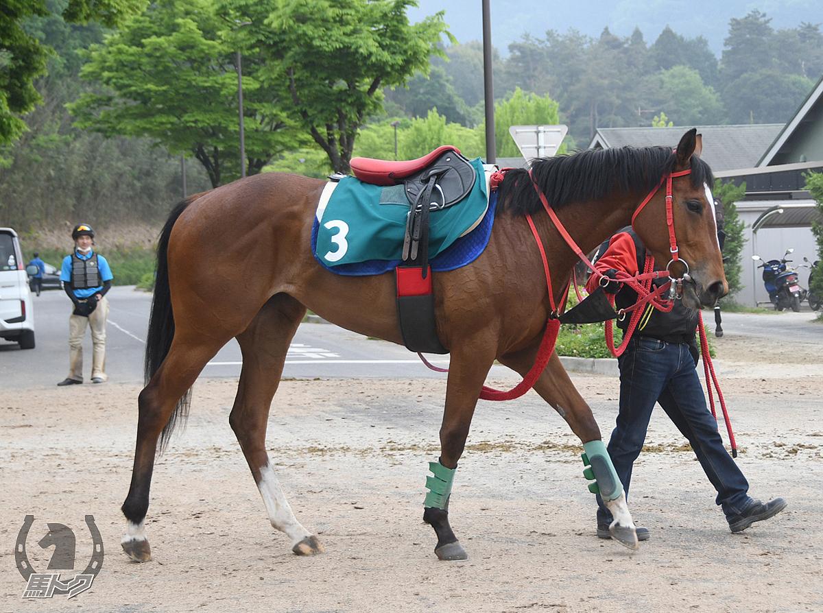 リネンリボンの馬体写真