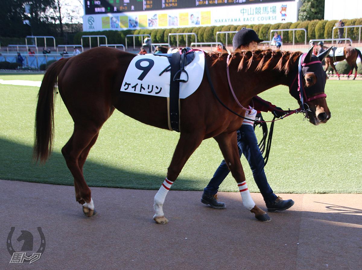 ケイトリンの馬体写真