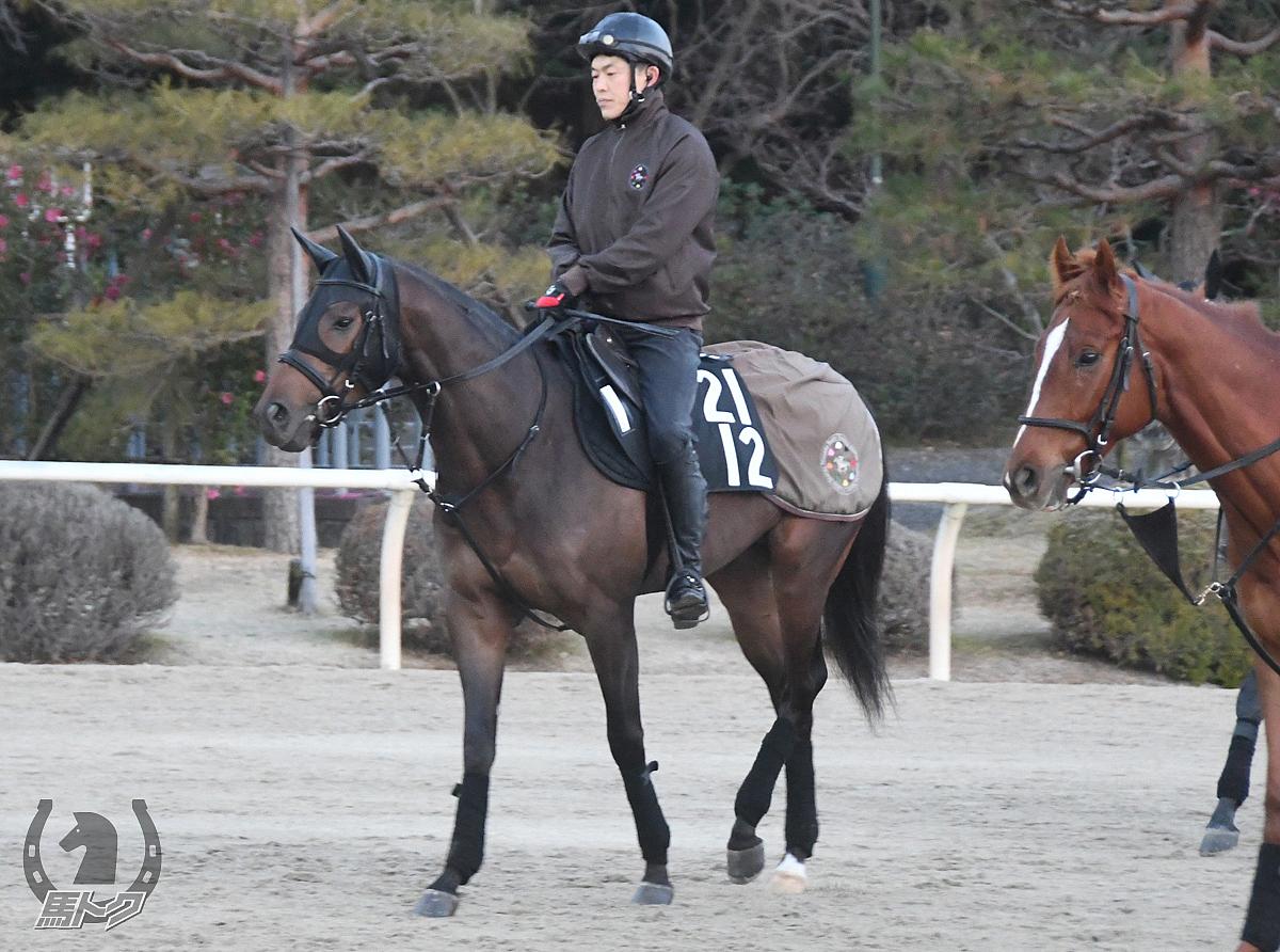 メイブツシャチョウの馬体写真