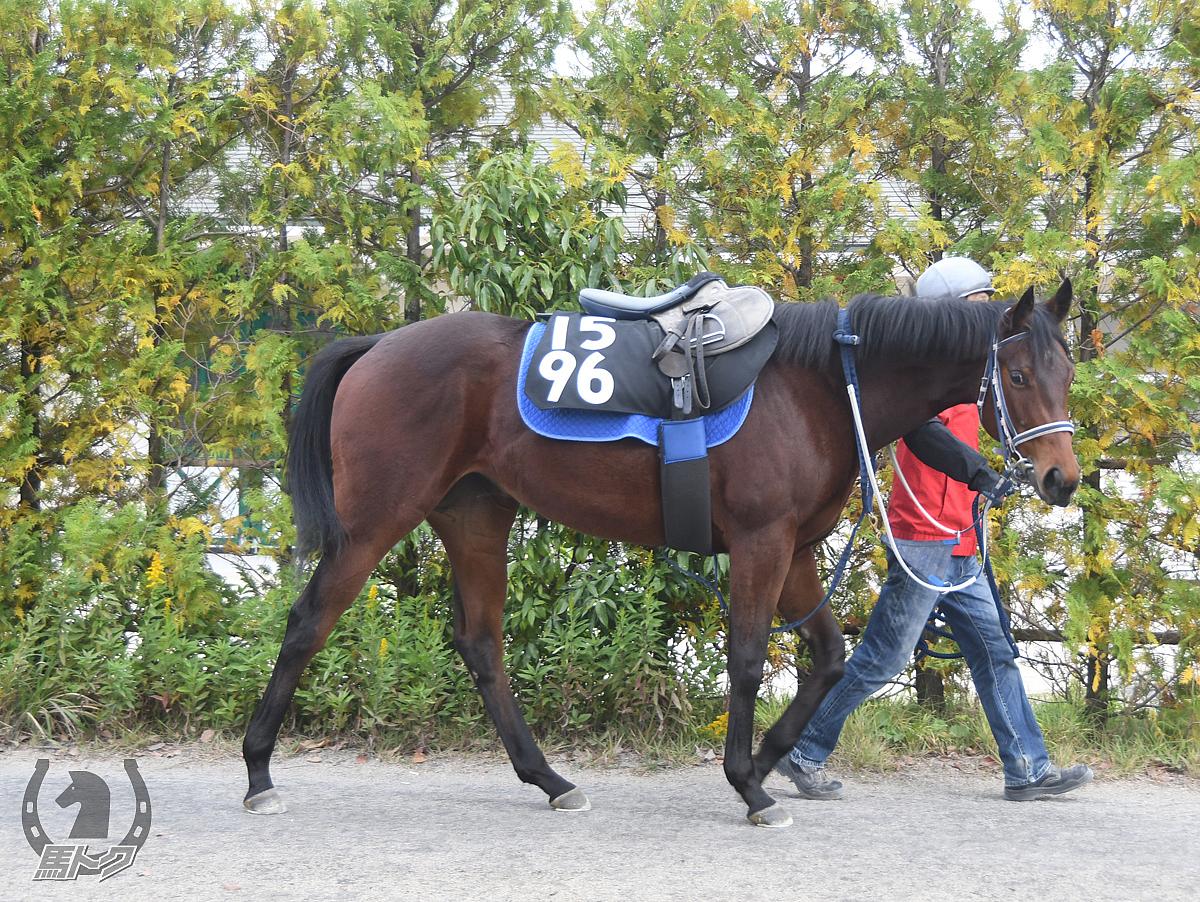 ヤマニンポンペルモの馬体写真