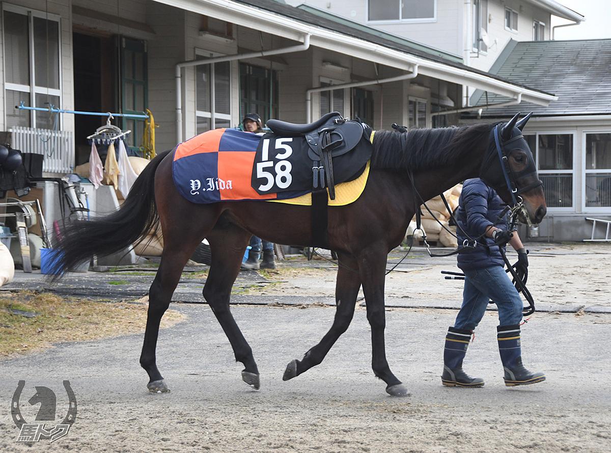 テイエムムーンダンの馬体写真