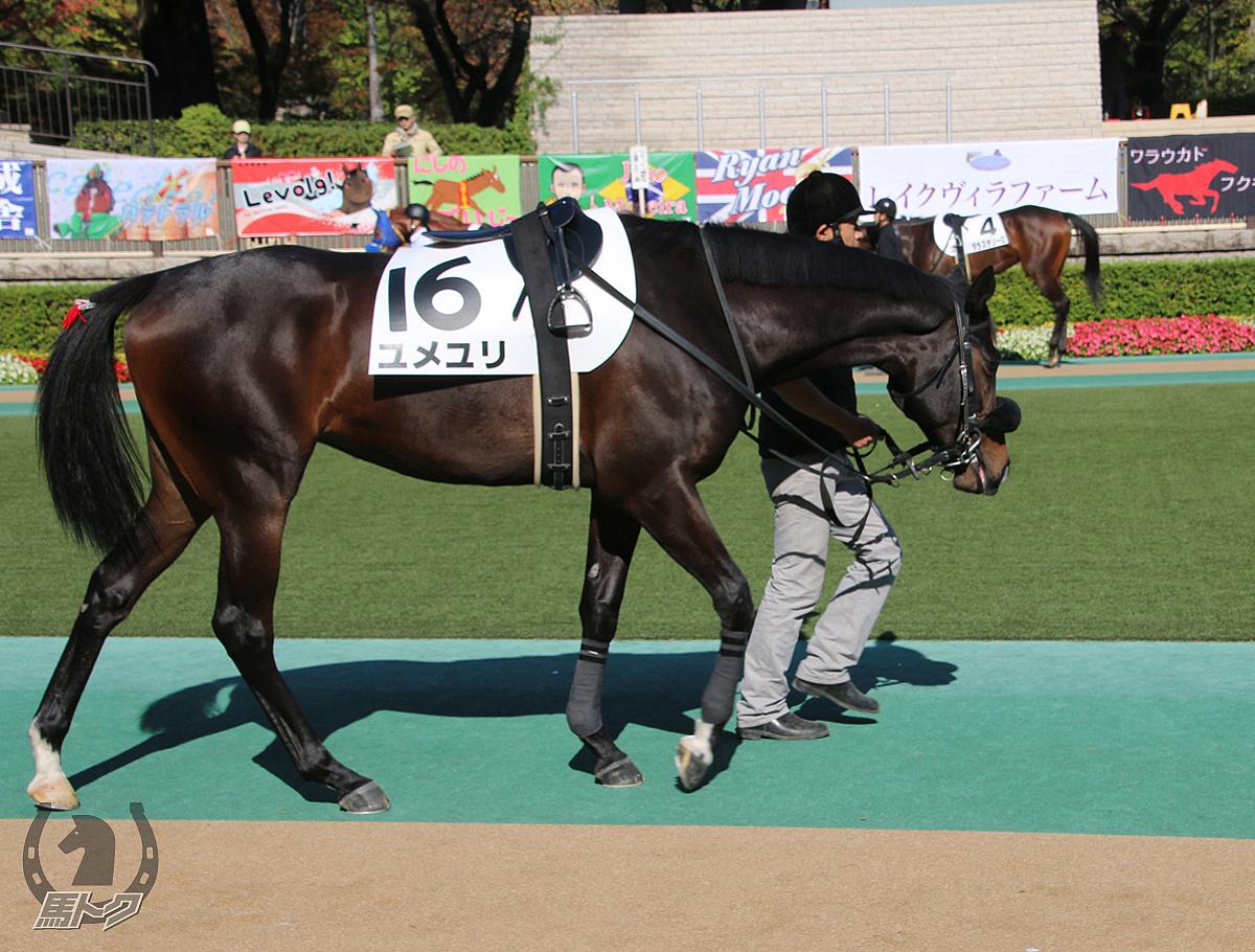 ユメユリの馬体写真