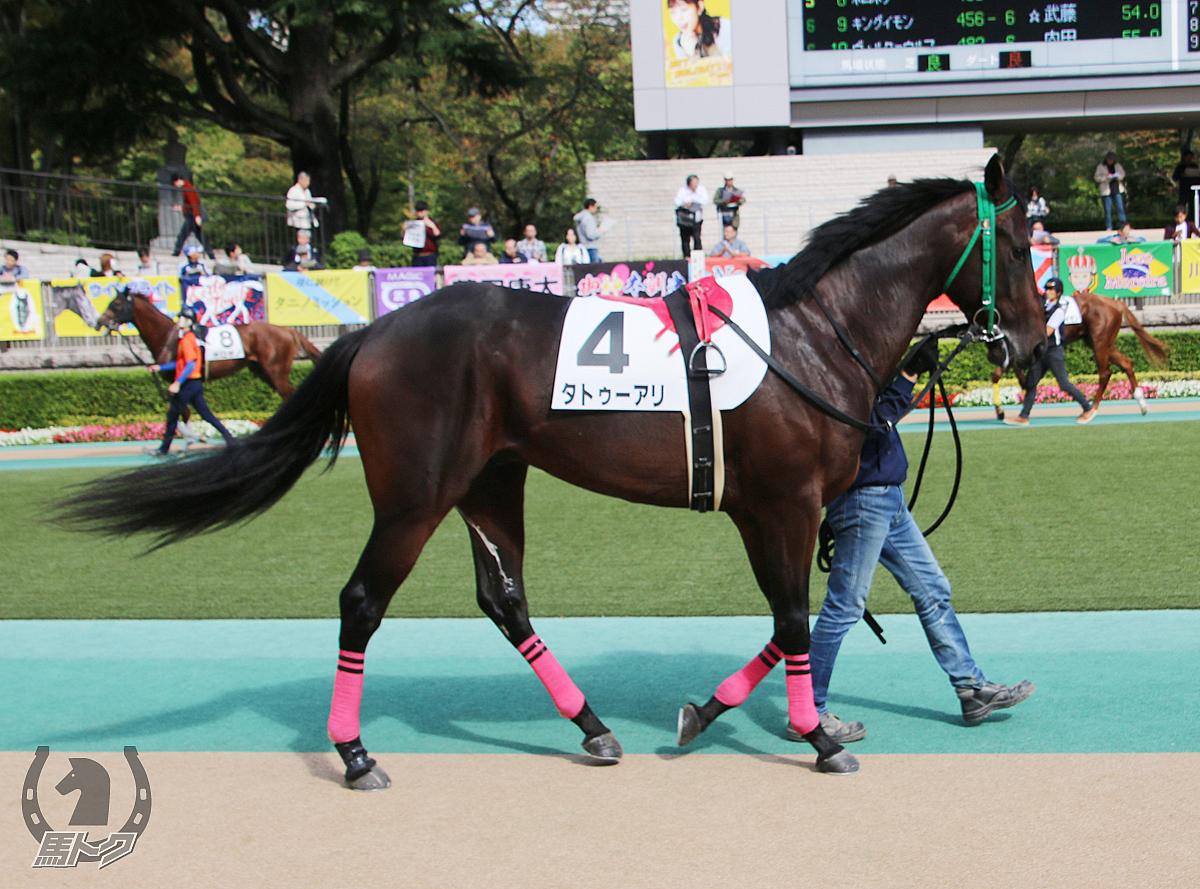 タトゥーアリの馬体写真