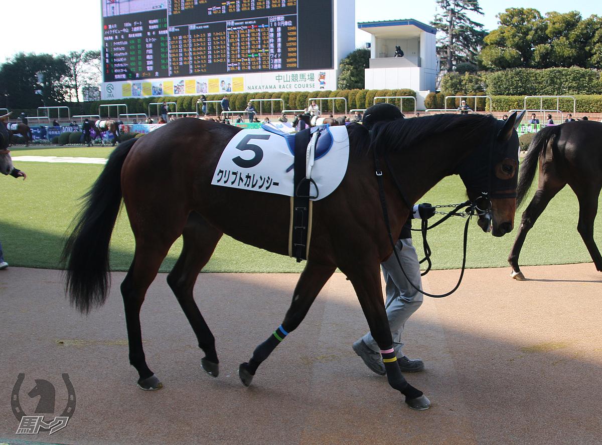 クリプトカレンシーの馬体写真