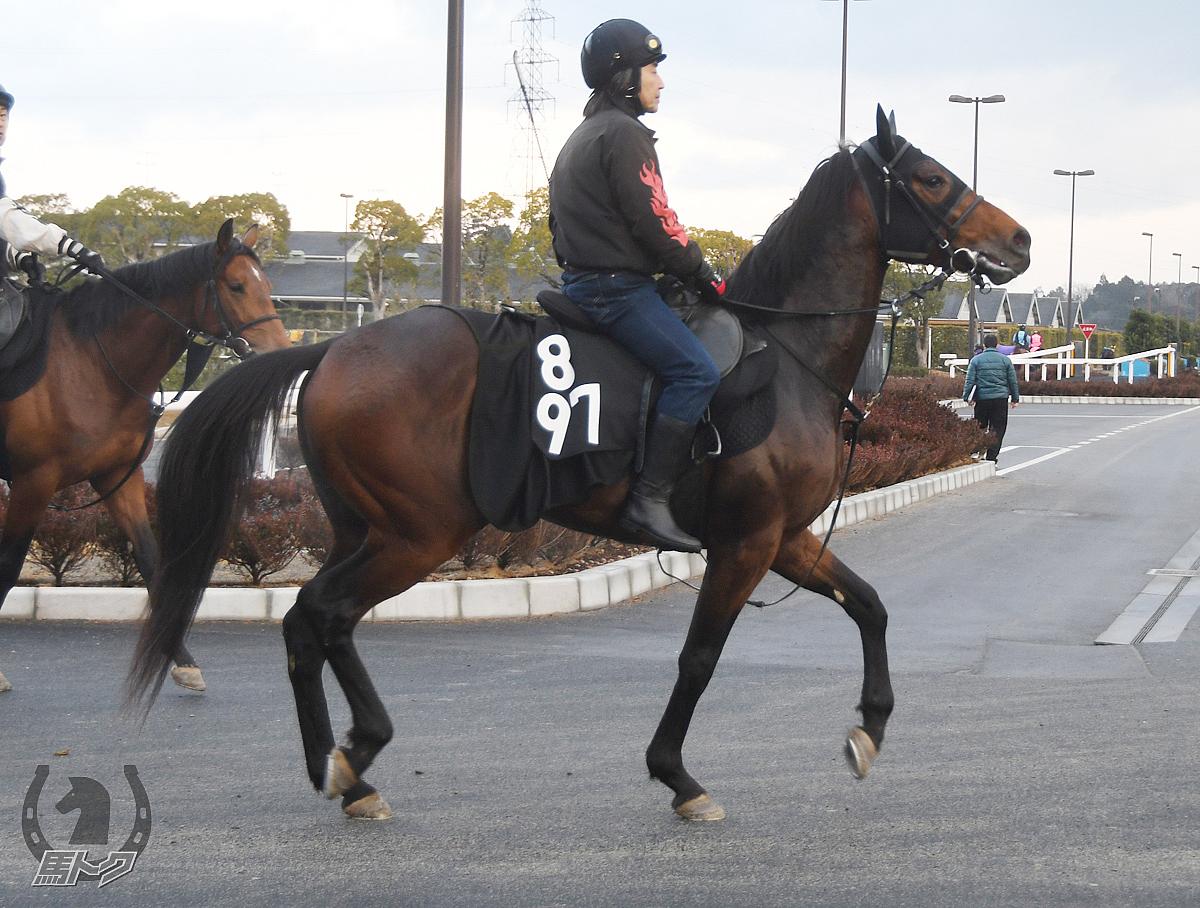 ブルベアベージュの馬体写真