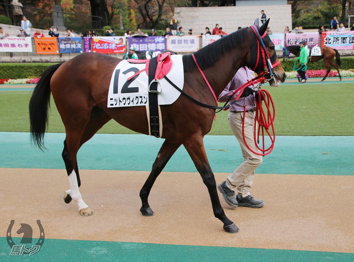 ニットウヴィクスンの馬体写真
