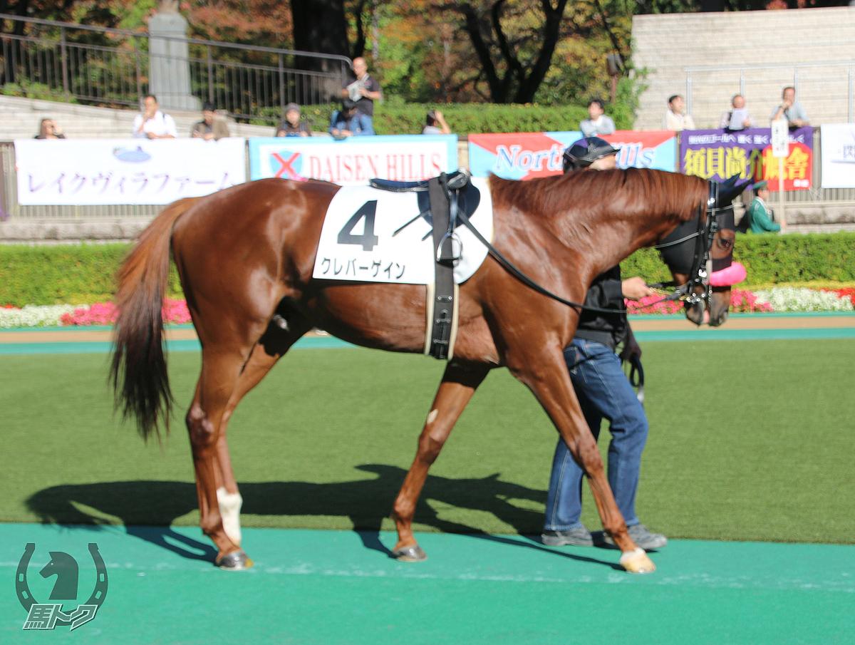 クレバーゲインの馬体写真