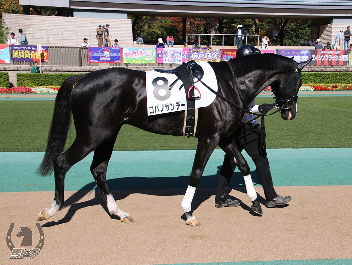 コパノサンデーの馬体写真