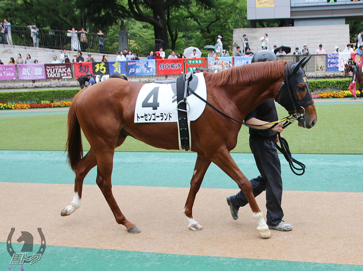 トーセンゴーランドの馬体写真
