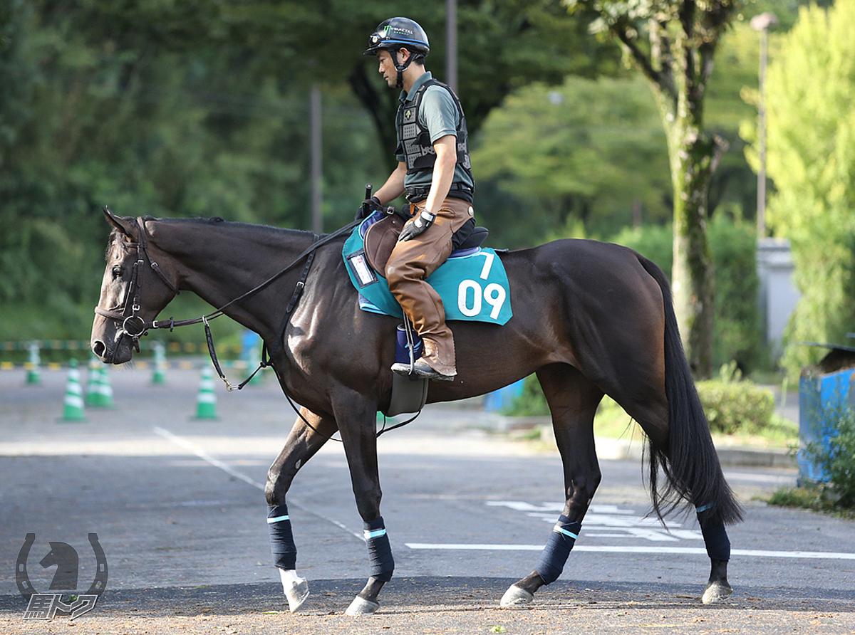 アデリナの馬体写真