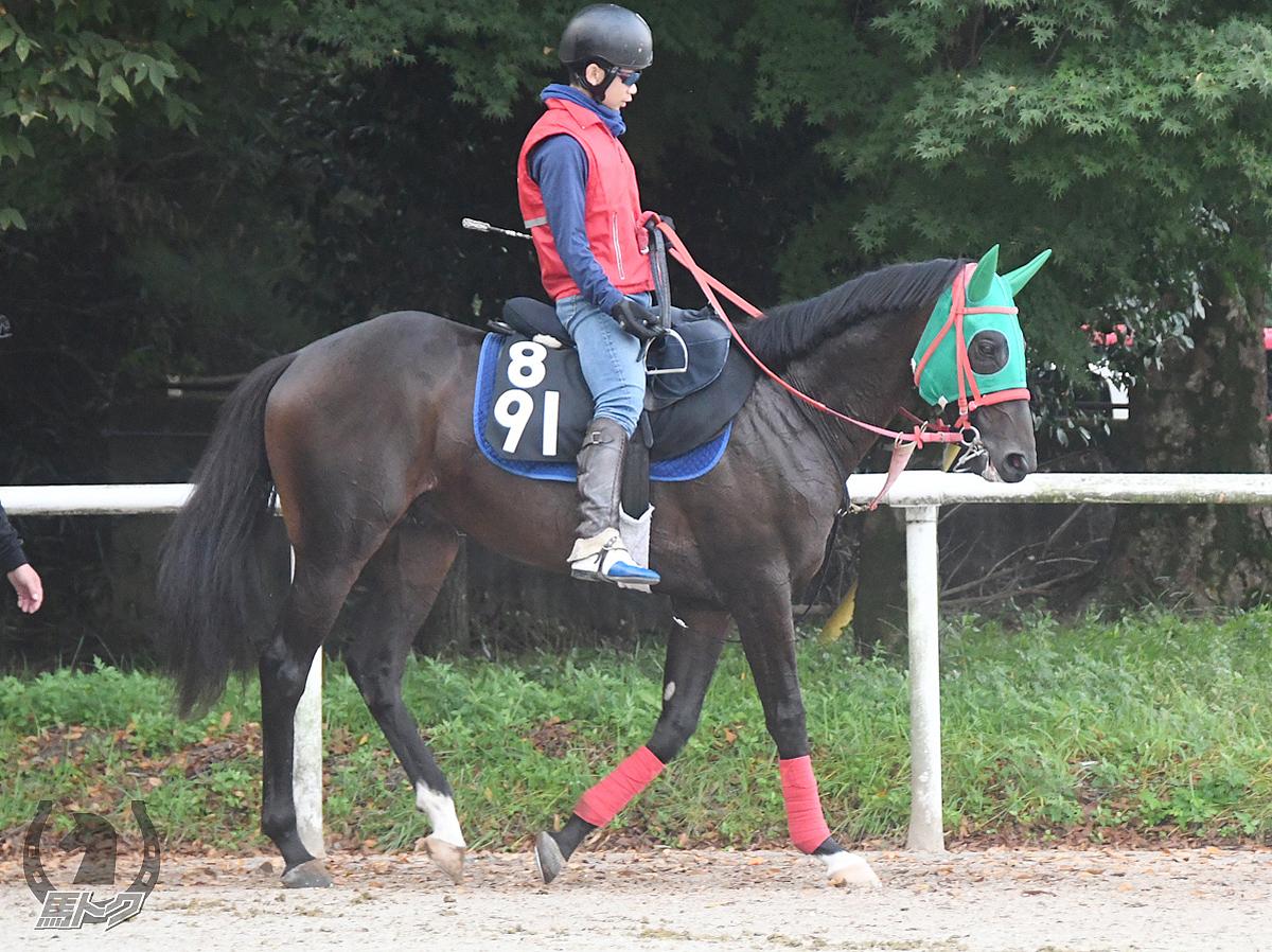 ブルベアオーロの馬体写真