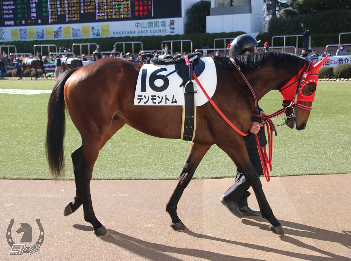 テンモントムの馬体写真