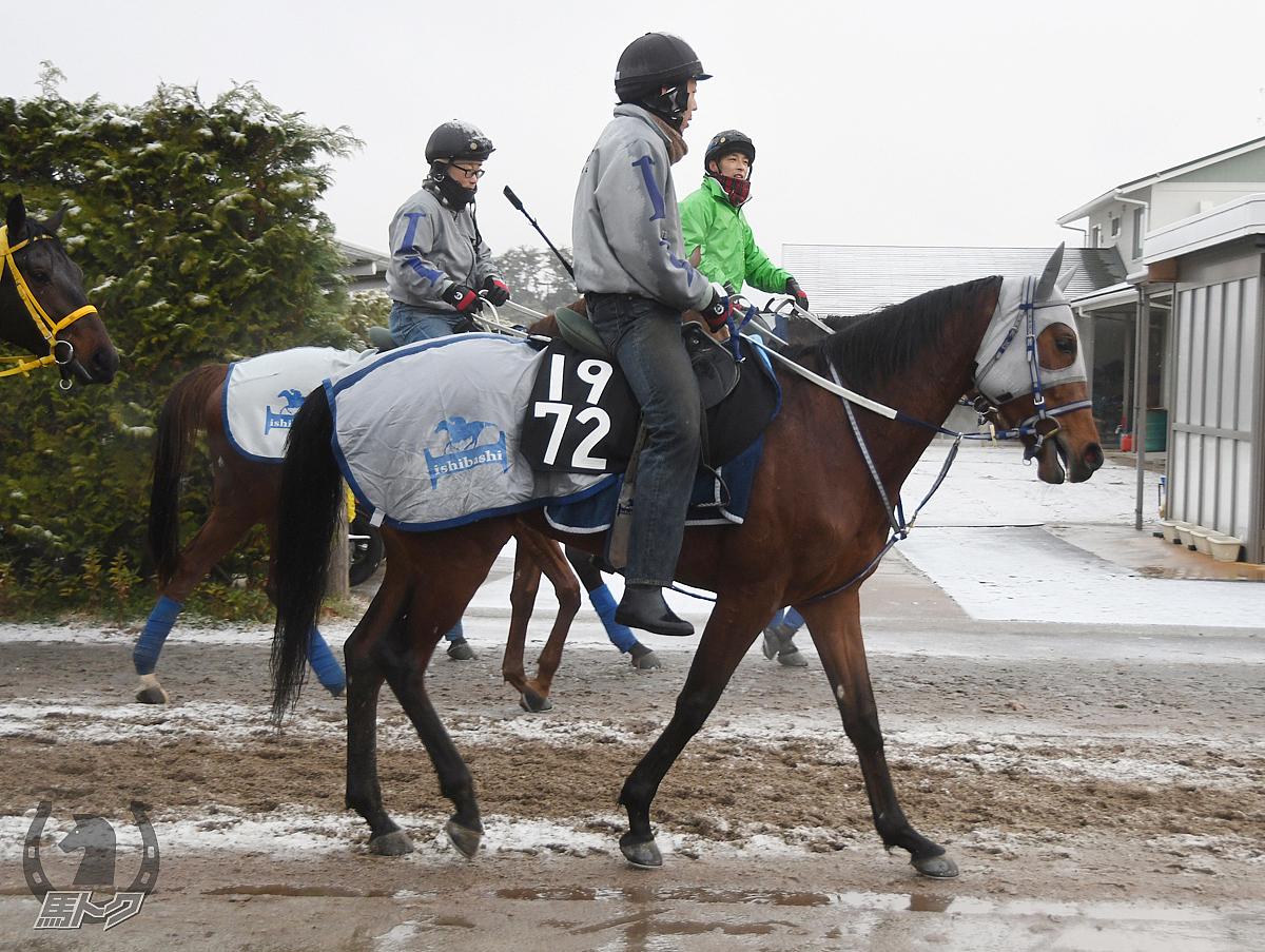 ジュエリーボックスの馬体写真