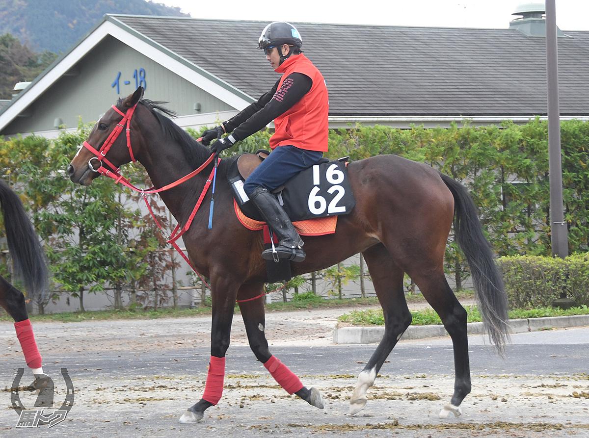 プニカの馬体写真